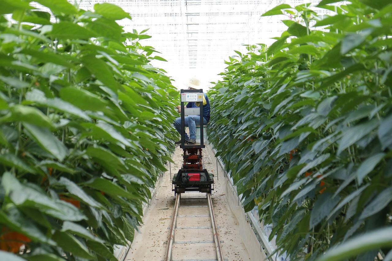 첨단기술 접목을 통해 미래 유망 분야로 주목받는 농업 세상을 바라보는 열린신문 아시아헤럴드